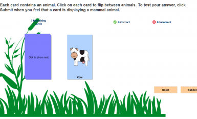 classifying-animals