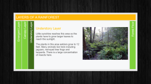 Layers of a Rainforest – Accordion