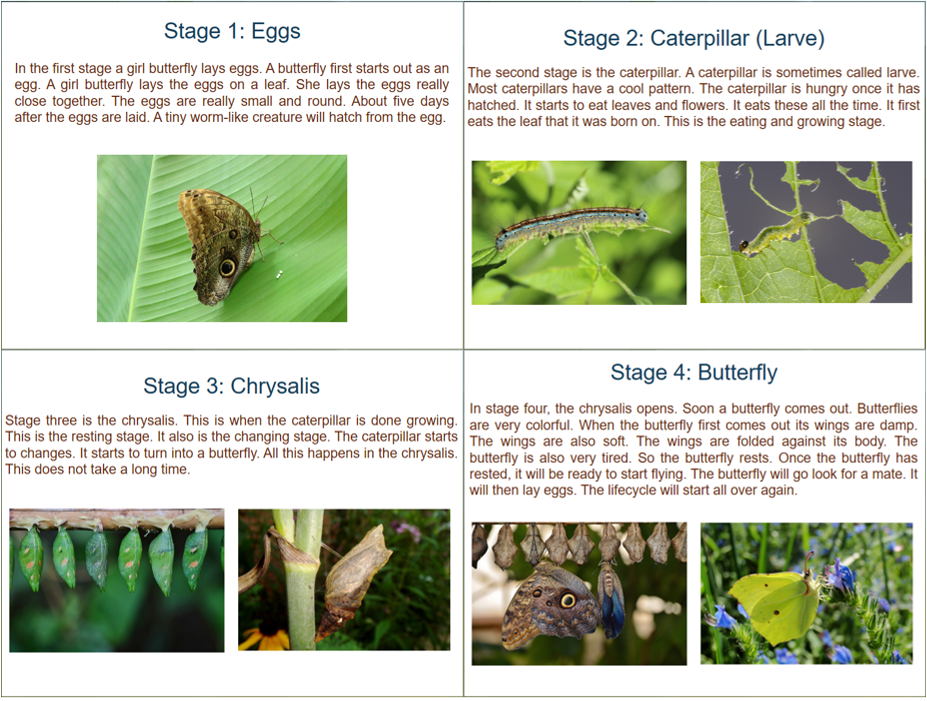 Four Stages of Butterfly Life Cycle